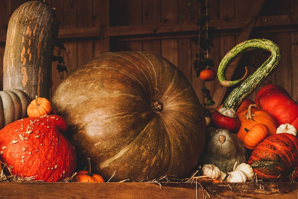 A Nyhus Thanksgiving
